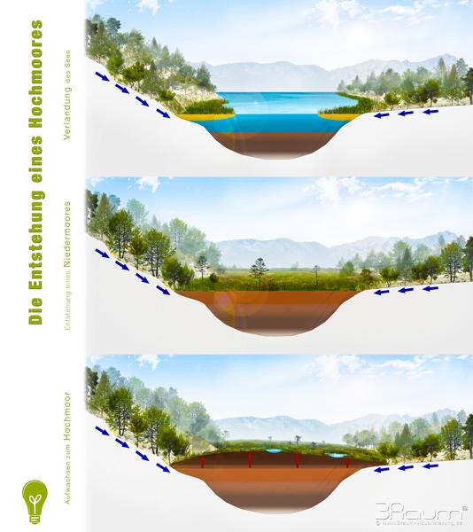 Umweltbildung Entstehung der Moore